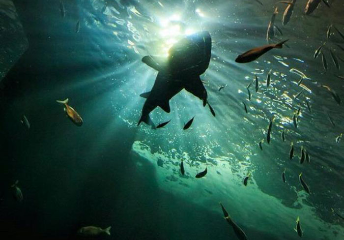 Visita guiada al acuario de sevilla asociaci n de - Entradas acuario sevilla ...